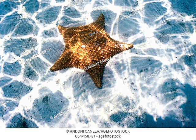 Starfish, Caribbean. Los Roques National Park, Venezuela