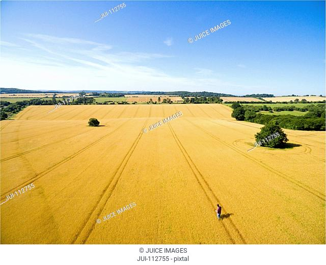 Aerial landscape view of farmer standing in sunny golden barley field