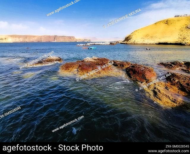National Reserve of Paracas, Ica department, Perú. South America