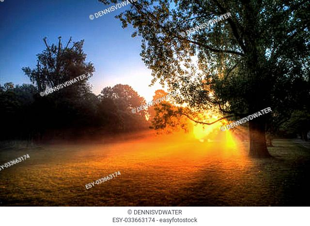 Early morning sunrise behind the trees in the Vondelpark, Amsterdam, on a foggy morning with a powerful sunburst