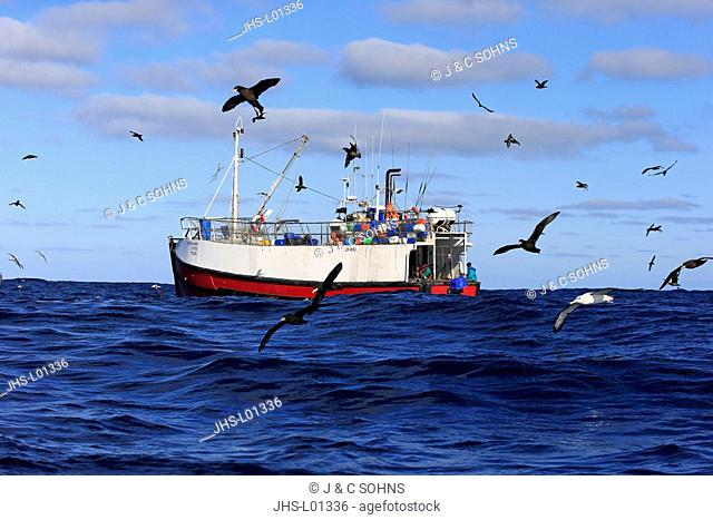 Trawler, catching fish followed by Sea Birds, Cape of the Good Hope, Cape, South Africa, Africa