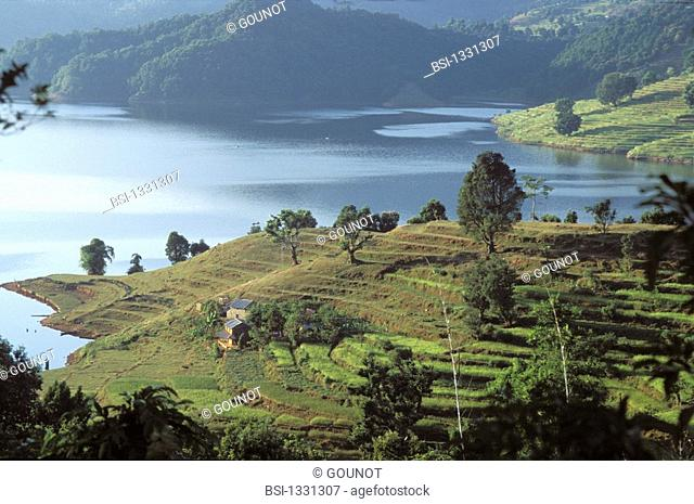 PLANTATION RICE Begnas lake in the region of Pokhara in Nepal. On this picture, we can observe cultures of rice paddy in terrace