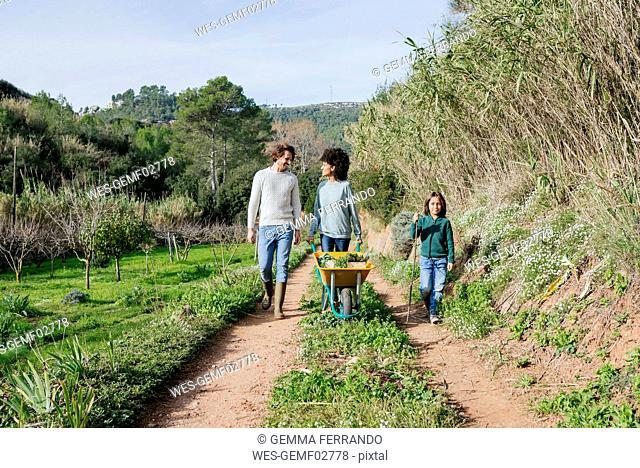 Family walking on a dirt track, pushing wheelbarrow, full of fresh vegetables
