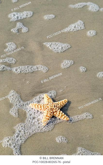 Starfish on sandy beach with ocean wash and seafoam