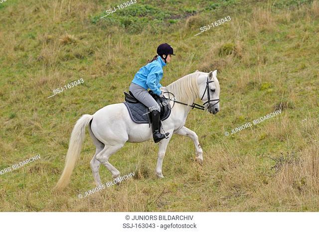 woman riding on Connemara horse