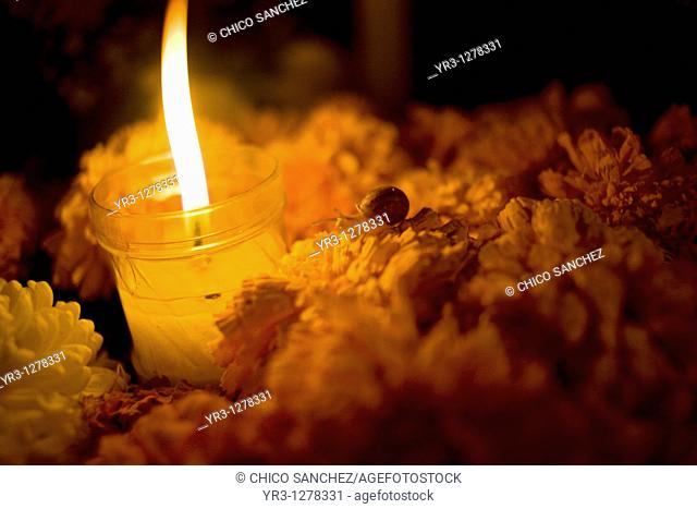 A snail crawls on yellow marigold flowers, known as Zempasuchitl, on a tomb decorated with a candle at the cemetery in San Gregorio Atlapulco, Xochimilco