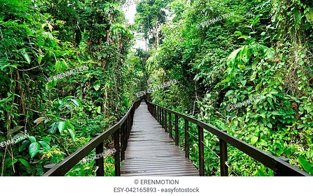 Bridge in the jungle of the national park of Cahuita, Caribbean, Costa Rica