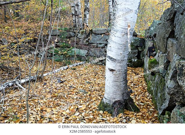 Remnants of the Goulding house in the abandoned village of Livermore in the New Hampshire White Mountains. This was a logging village in the late 19th and early...