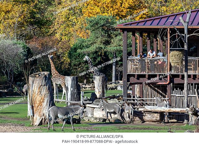 17 July 2018, Saxony, Leipzig: Visitors watch giraffes and zebras from the terrace of the Kiwara Lodge in Leipzig Zoo on the outdoor area of the Kiwara Savannah