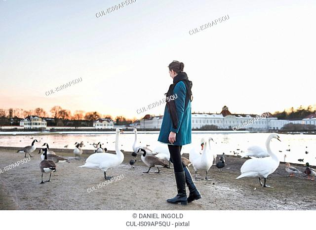 Mid adult woman standing on park lakeside watching swans, Munich, Germany