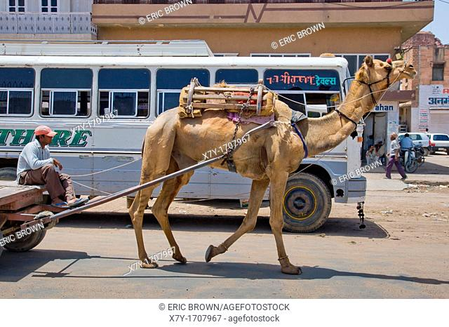 A camel pulls a cart on the street in Jodhpur, India