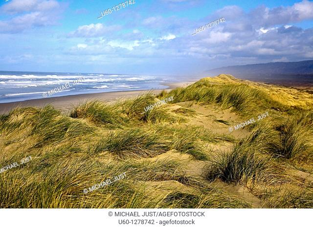 Tall grass, ocean views and sand dunes comprise the Oregon Dunes National recreation Area on the Oregon Pacific Coast