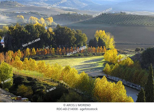 Deciduous trees in autumn, Ronda, province Malaga, Andalusia, Spain