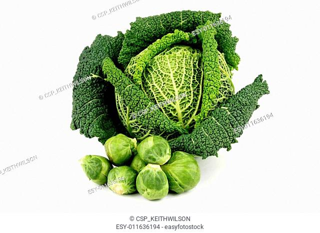 Green Cabbage and Sprouts