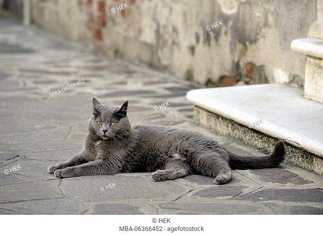 a grey cat lies on the ground