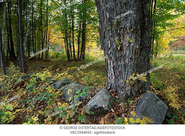 Benjamin Doolittle Homestead (1805), Pisgah State Park, New Hampshire