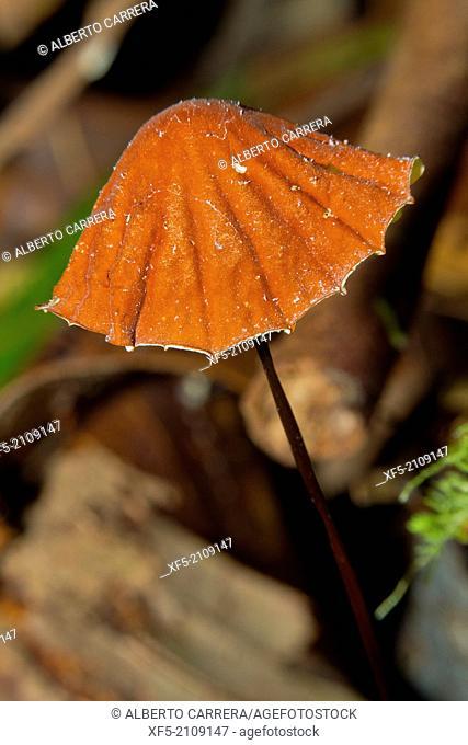 Mushroom, Sekonyer River, Tanjung Puting National Park, Kalimantan, Borneo, Indonesia