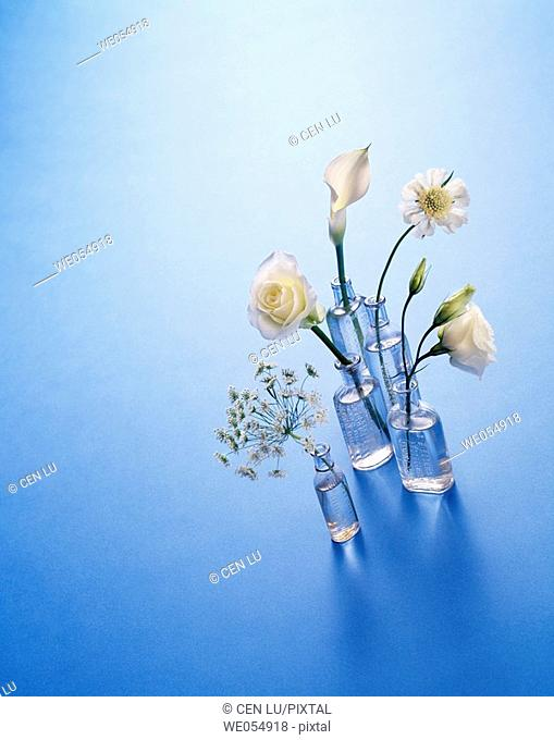 Flowers in antique bottle vases on blue, white rose, white Cala lily