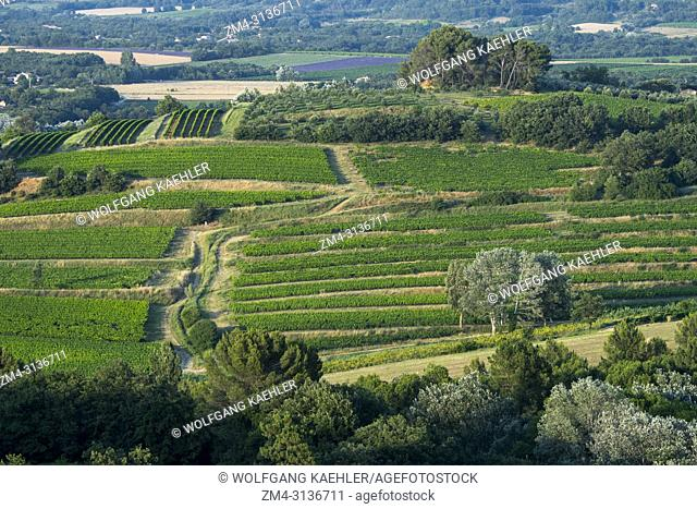View of vineyards from the village of Roussillon in the Luberon, Provence-Alpes-Cote d Azur region in southern France