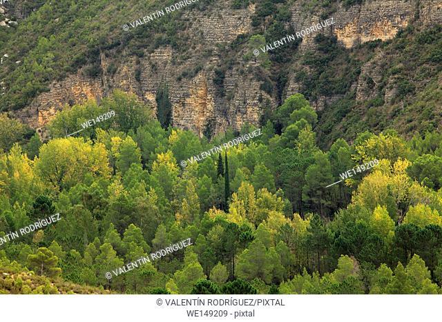 Forest in the Turia river in Calles, in the area called Jórgola. La Serranía region. Valencia