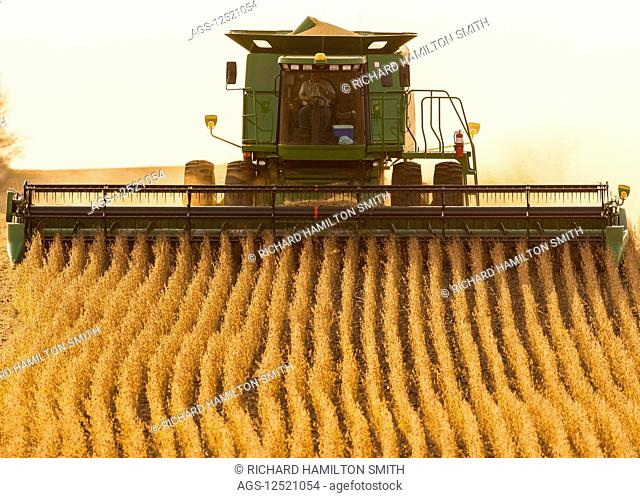 Combine picking beans during soybean harvest, near Nerstrand; Minnesota, United States of America