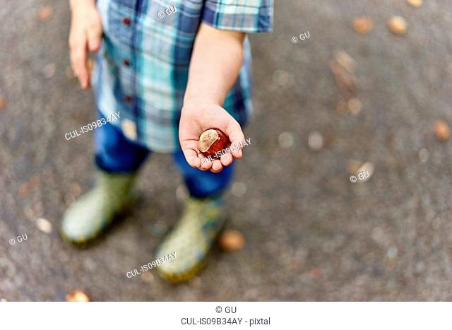 Cropped view of boy's hands holding conker
