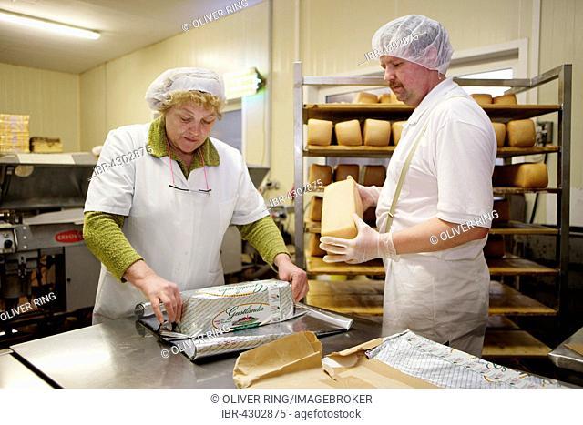 Cheese makers are packaging cheese at the Sarzbüttel fine cheese dairy, Sarzbüttel, Schleswig-Holstein, Germany, Düsseldorf