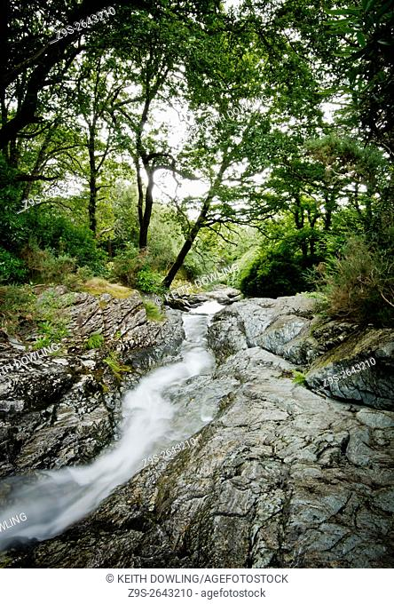 Rain water runs off in Woodland. Mourne Mountains, County Down, Northern Ireland