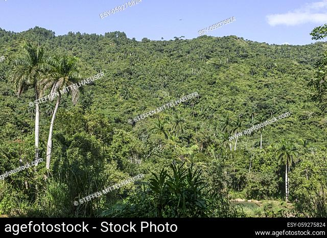 Escambray mountains covered in a dense carpet of palm trees and jungle vegetation, Cienfuegos Province, Cuba