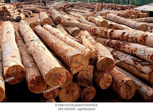 Pile of wood logs in a legal sawmill, Rio Branco Acre, Brasil, 2011