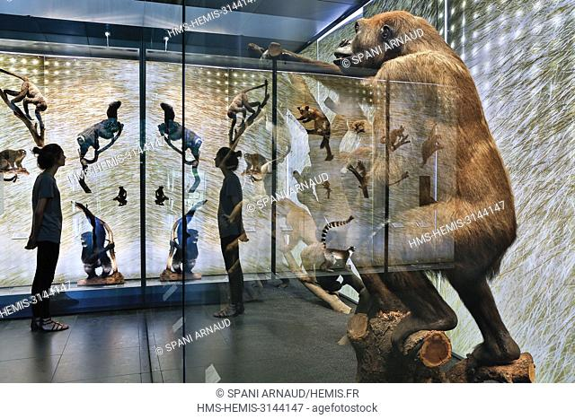 France, Haute Garonne, Toulouse, listed at Great Tourist Sites in Midi-Pyrenees, Museum, hall of the natural history museum