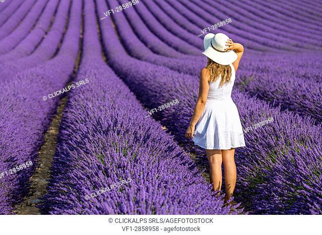 Woman in white in a lavender field. Plateau de Valensole, Alpes-de-Haute-Provence, Provence-Alpes-Côte d'Azur, France, Europe