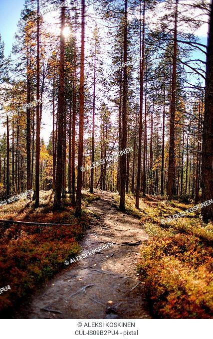 Scenic path on sunny day, Keimiotunturi, Lapland, Finland