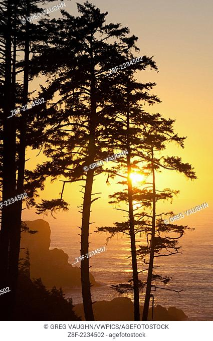 Sunset through pine trees at Ecola Point; Ecola State Park, Cannon Beach, northern Oregon Coast