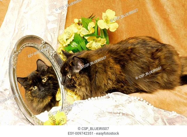 A Dark Calico Cat in the Mirror