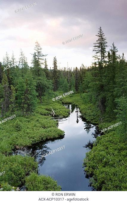 Boreal forest and wetlands along the Labrador Coastal Drive, east of Red Bay, Labrador, Newfoundland and Labrador, Canada