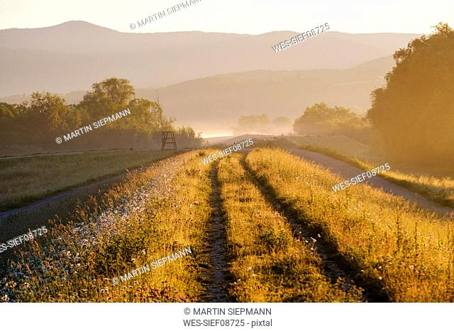 Pathway amidst grass with mountains in background during foggy weather, Bavaria, Germany