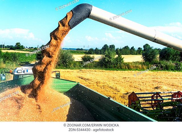 Ein Getreidefeld mit Weizen bei der Ernte. Ein Mähdrescher bei der Arbeit