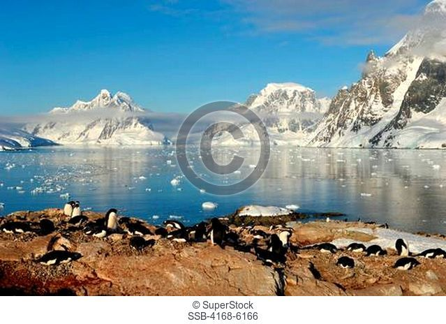 ANTARCTICA, ANTARCTIC PENINSULA, PETERMANN ISLAND, ADELIE PENGUIN COLONY Pygoscelis adeliae, LEMAIRE CHANNEL IN BACKGROUND