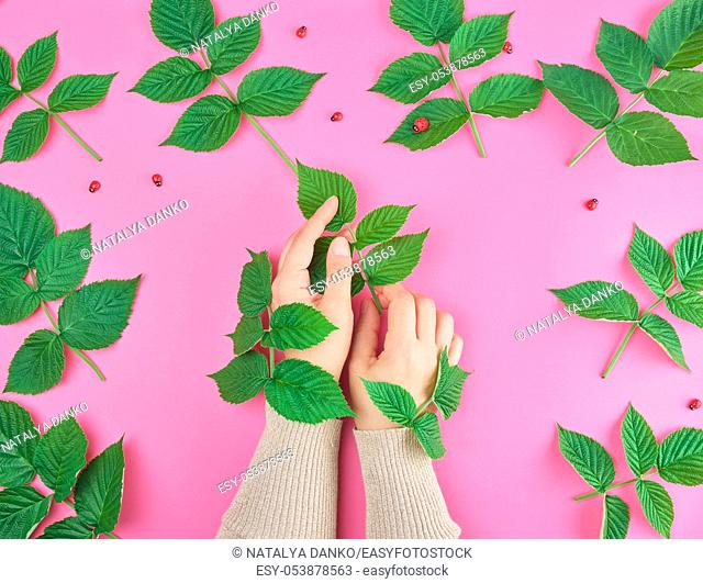 two female hands of a young girl with smooth skin, pink background with green leaves of raspberry, concept of spa treatments for the skin