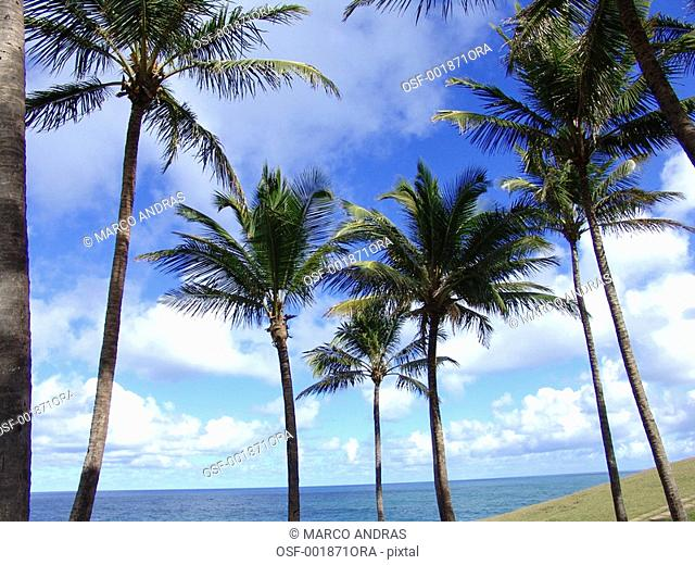 salvador palm trees in the green grass square beach