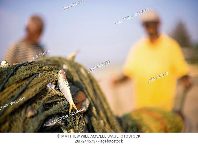 Weligama Beach, a fish caught in a fishing net on the South Coast of Sri Lanka, Asia