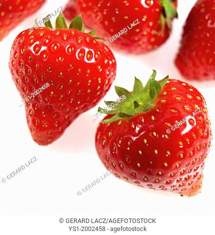 Strawberries, fragaria vesca, Fruits against White Background