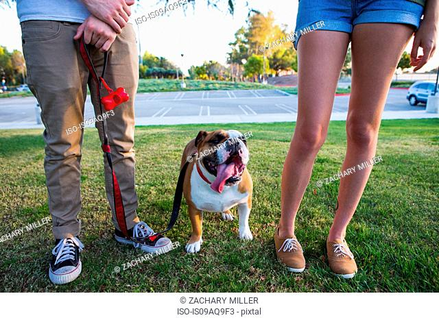 Portrait of bulldog in park between legs of young couple