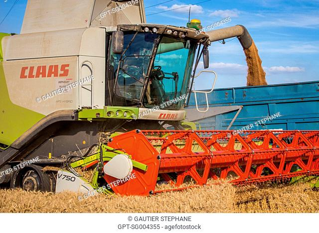 HARVESTING AT THE VILTAIN FARM FARM, JOUY EN JOSAS, (78) YVELINES, ILE-DE-FRANCE