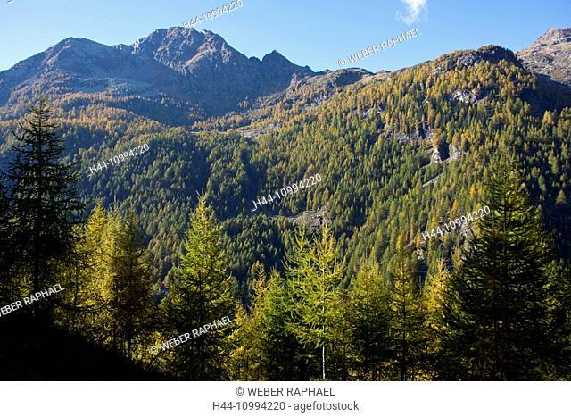 Switzerland, Europe, Ticino, Val di Prato, mountain wood, larches, spruces, autumn, mountain, Pizzo Rüscada