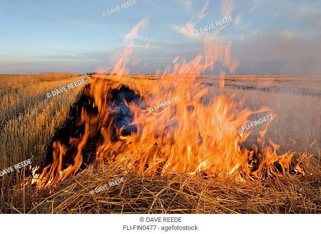 Artist's Choice: Wheat stubble burning, near St. Agathe, Manitoba