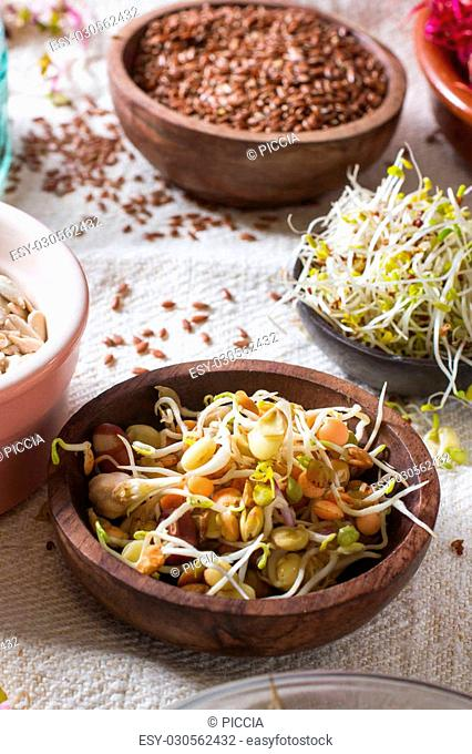 Colourful and healthy crunchy mixed seeds and various sprouts. Focus on bean sprouts, with alfalfa, sunflower seeds, linseed and beet sprouts in the background