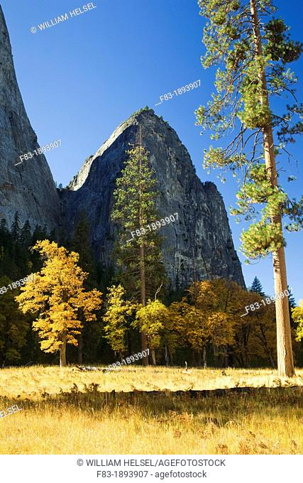 Yosemite Valley, Yosemite National Park, California, USA, Cathedral rocks and The Gunsight notch, Ponderosa pines Pinus ponderosa