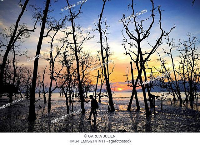 Malaysia, Borneo, Sarawak, Bako National Park, silhouette of a woman hiking among trees and mangrove at sunset at Telok Assam beach